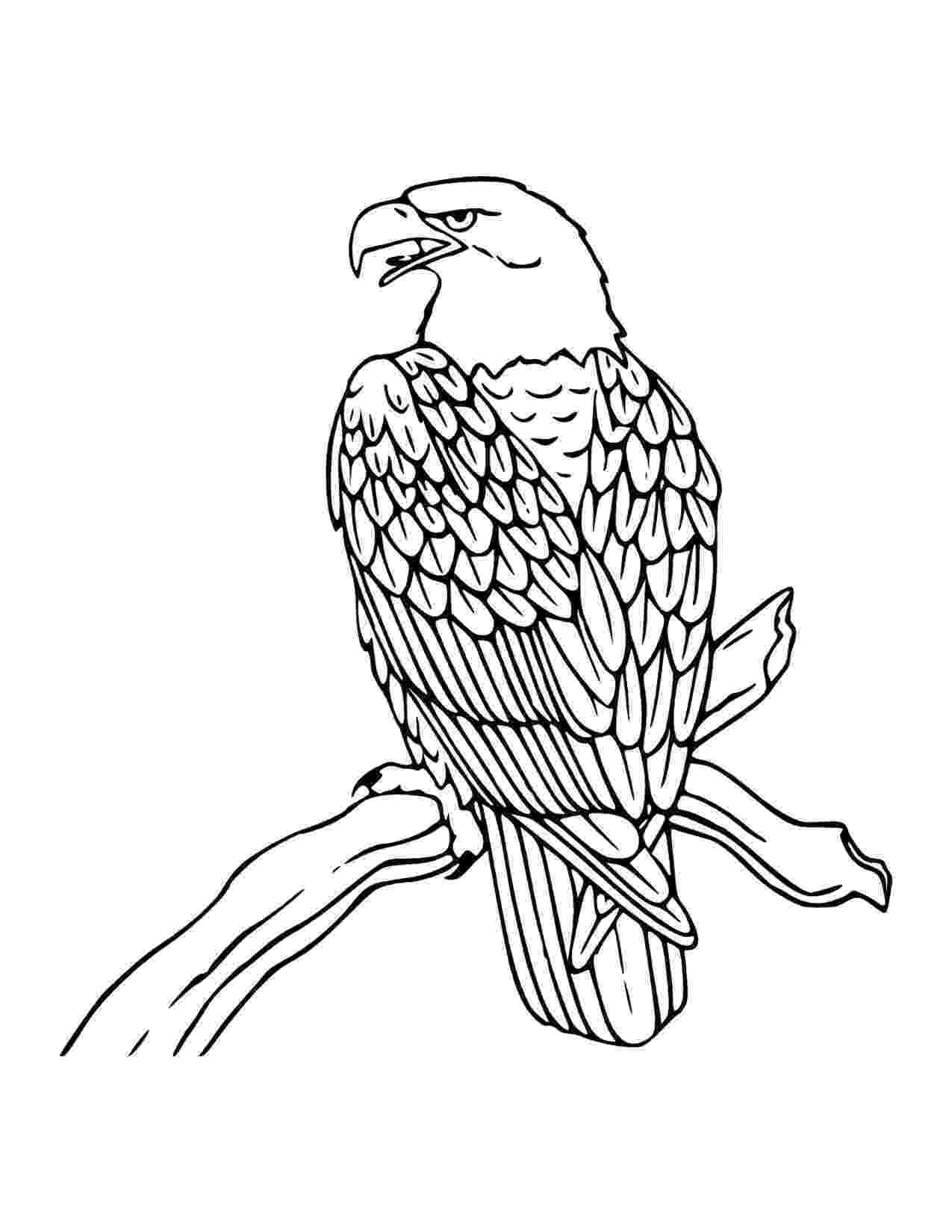bald eagle coloring free printable bald eagle coloring pages for kids eagle bald coloring