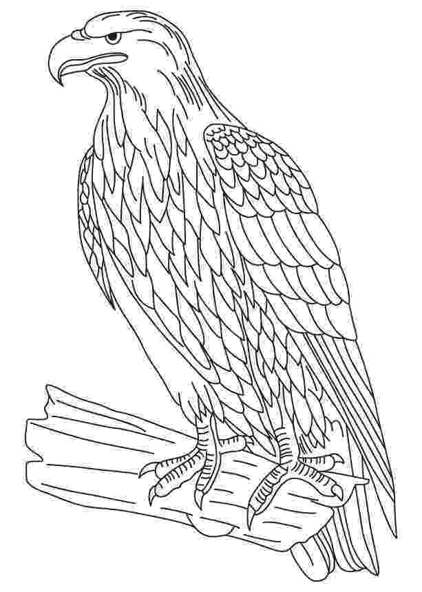 bald eagle coloring rules of the jungle printable pictures of bald eagle eagle coloring bald