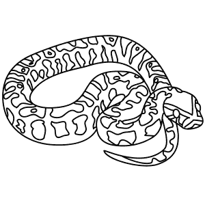 ball python coloring pages ball python coloring drawings ball python coloring pages python ball pages coloring