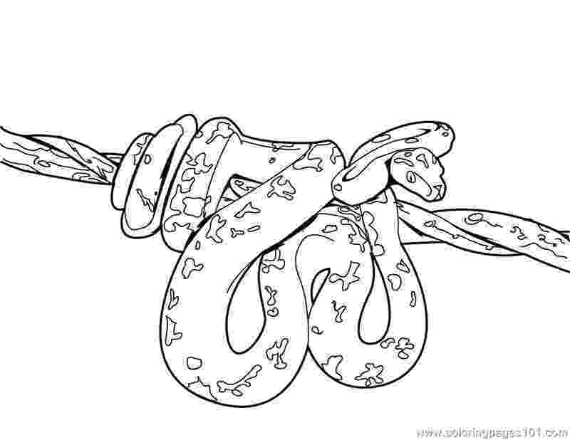 ball python coloring pages ball python drawing at getdrawingscom free for personal coloring python pages ball