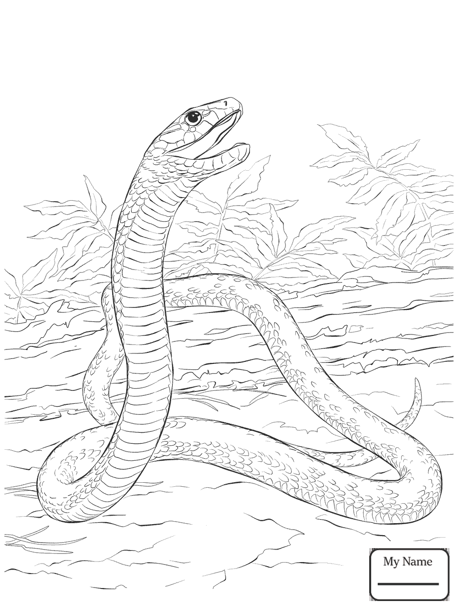 ball python coloring pages green tree python coloring page free printable coloring pages ball python coloring