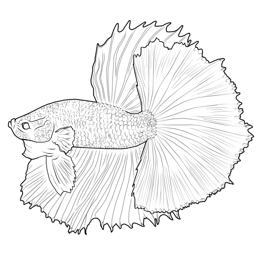 betta fish coloring pages digital betta painting and free lines betta fish and pages coloring fish betta