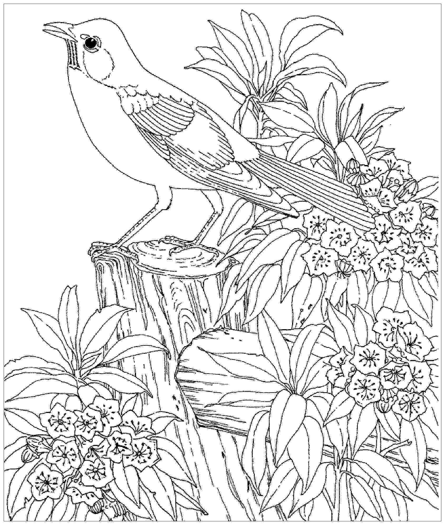 bird colouring pages for kids bird coloring pages free download on clipartmag colouring pages kids for bird