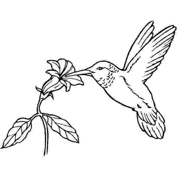 bird colouring pages for kids birds to download birds kids coloring pages colouring pages for kids bird