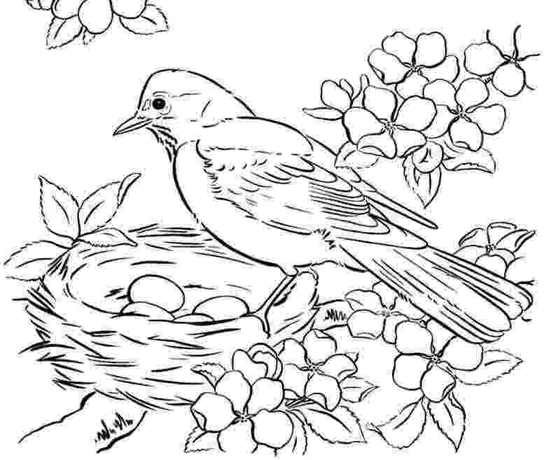 bird colouring pages for kids pin by teri inman on my board bird coloring pages easy kids pages bird colouring for