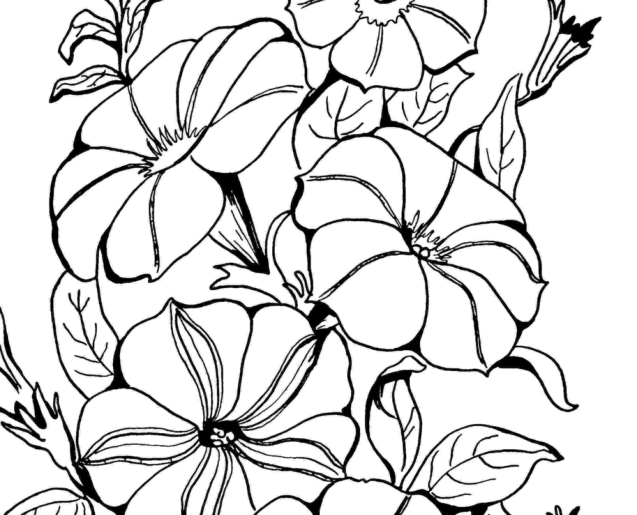 black and white coloring pages for adults adult coloring page petunias the graphics fairy pages white black adults and for coloring