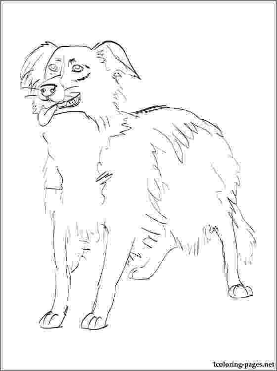 border collie coloring pages collie coloring download collie coloring for free 2019 coloring border collie pages