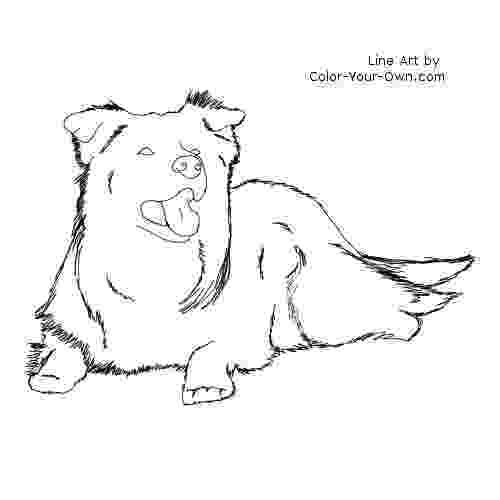 border collie coloring pages coloringpagebordercollie coloring collie pages border