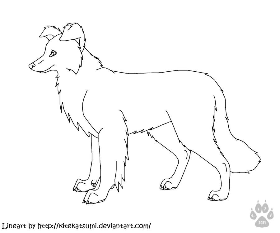 border collie coloring pages scotch sheep dog or border collie coloring page free pages border collie coloring