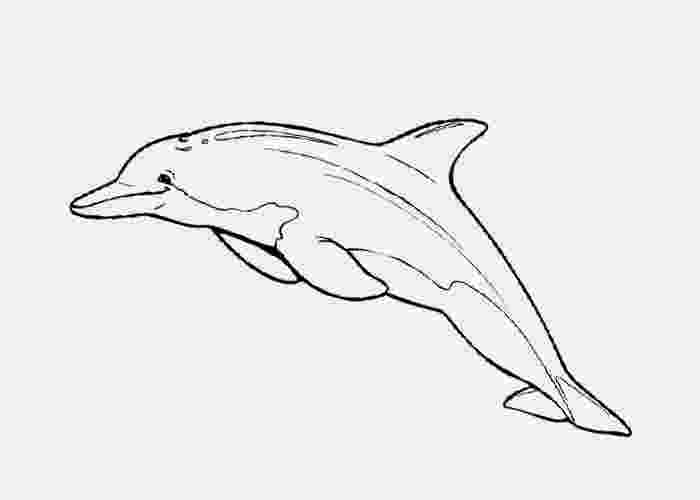 bottlenose dolphin pictures printable bottlenose dolphin coloring pages free coloring pages printable dolphin pictures bottlenose