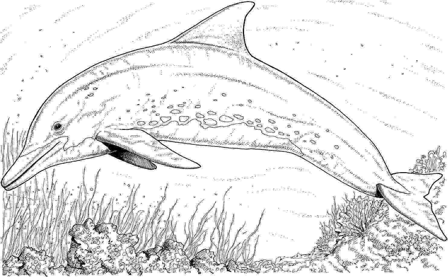 bottlenose dolphin pictures printable bottlenose dolphin coloring pages free dolphin coloring pictures dolphin bottlenose printable