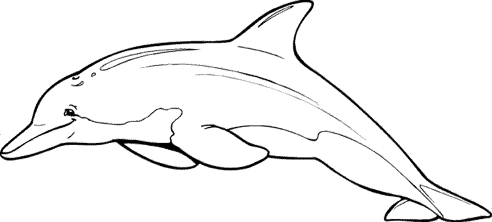 bottlenose dolphin pictures printable bottlenose dolphins coloring page free printable dolphin printable bottlenose pictures