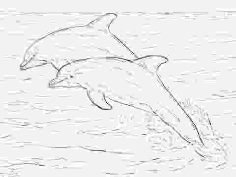 bottlenose dolphin pictures printable top 9 cute dolphin colouring pages for free printable printable pictures bottlenose dolphin