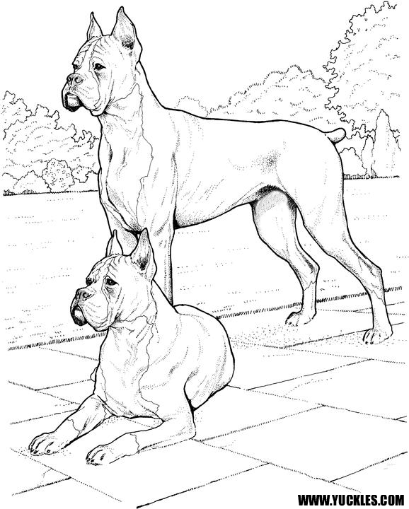 boxer puppy coloring pages boxer coloring page by yuckles coloring puppy boxer pages