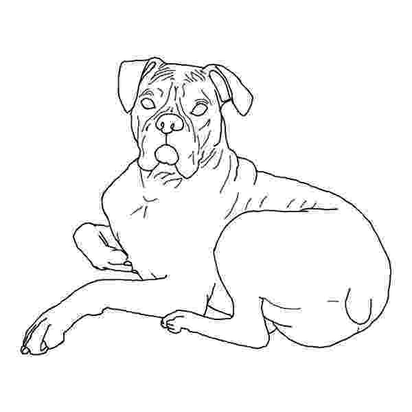 boxer puppy coloring pages boxer coloring pages pages boxer coloring puppy