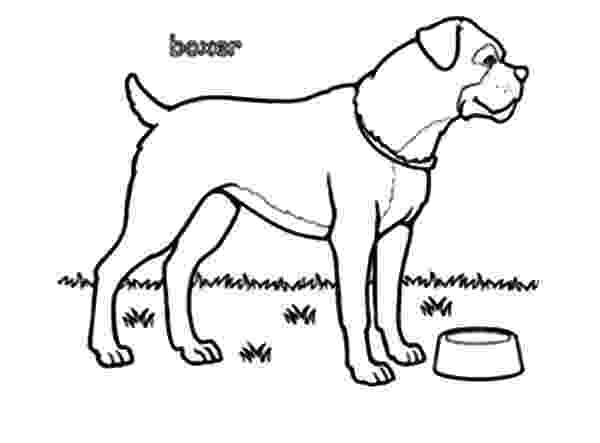 boxer puppy coloring pages boxer coloring pages puppy boxer coloring pages