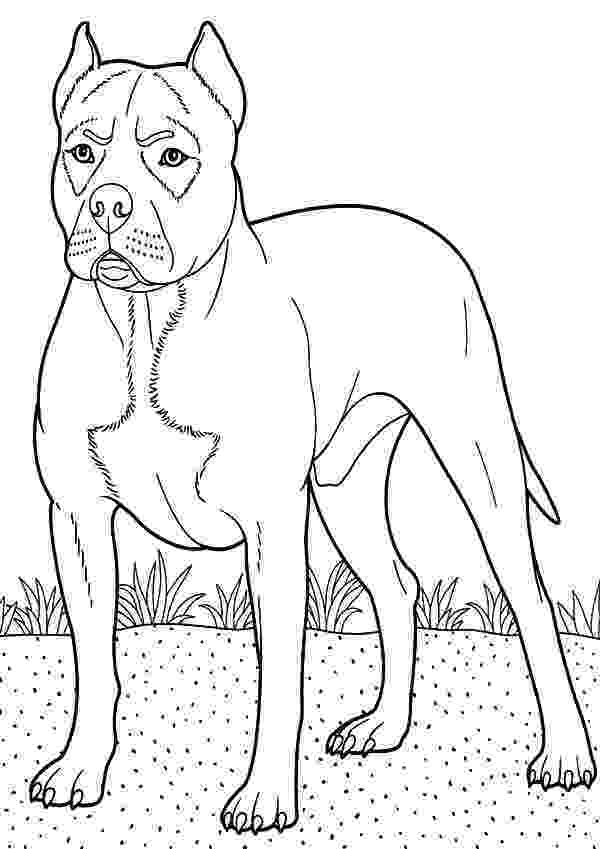 boxer puppy coloring pages boxer dog breed pages coloring pages puppy boxer coloring pages