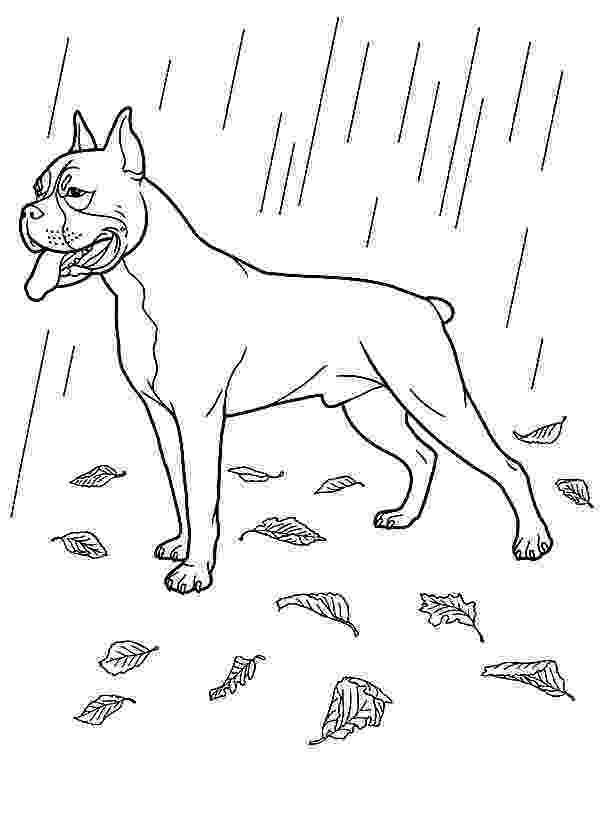 boxer puppy coloring pages boxer dog coloring pages az sketch coloring page boxer pages puppy coloring
