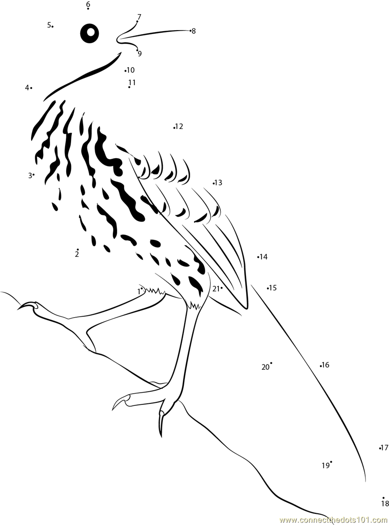 brown thrasher coloring page bird coloring pages fun interactive color book pages of thrasher brown coloring page