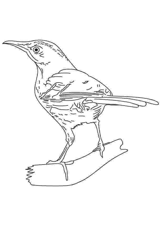 brown thrasher coloring page bold brown thrasher coloring page download free bold thrasher page coloring brown