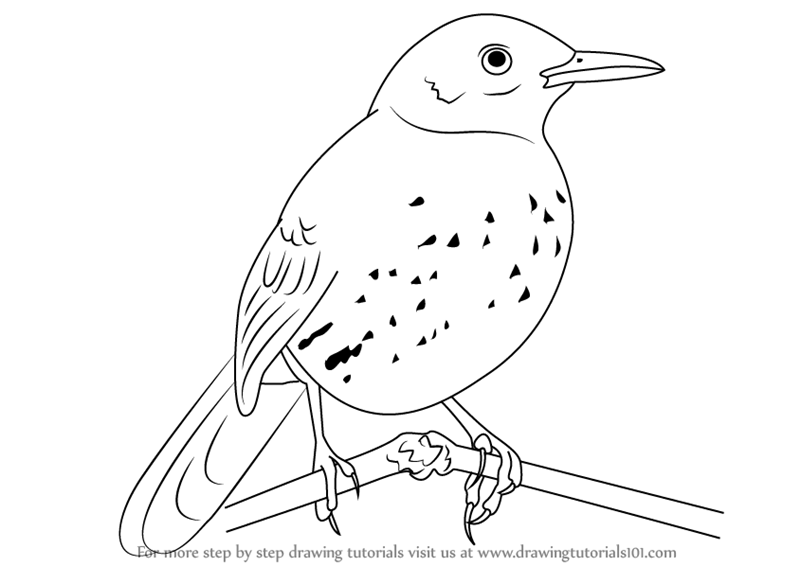 brown thrasher coloring page brown definition etymology and usage examples and brown page thrasher coloring