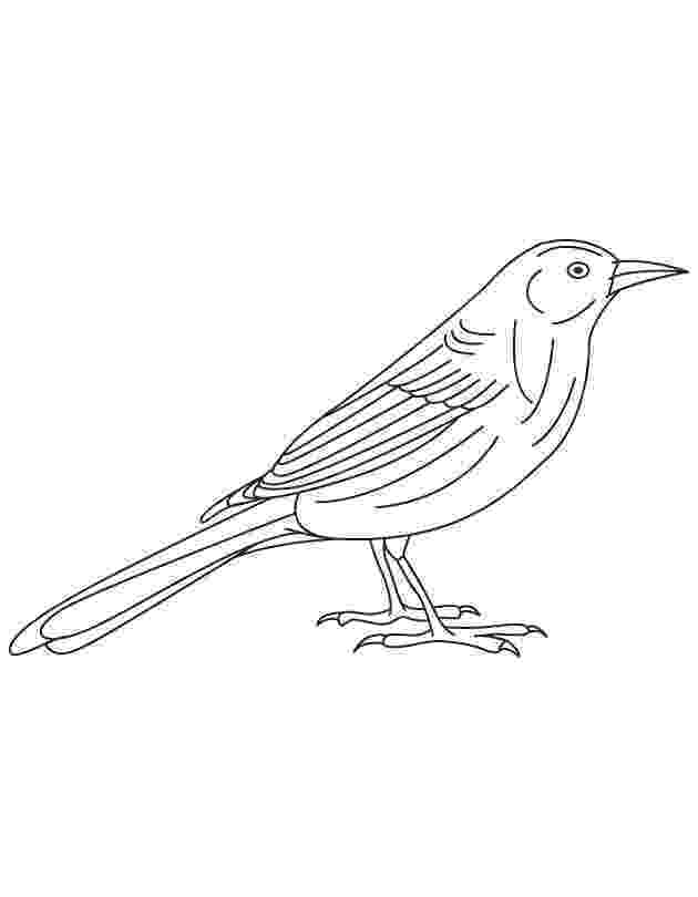 brown thrasher coloring page brown thrasher coloring page coloring coloring pages page brown thrasher coloring