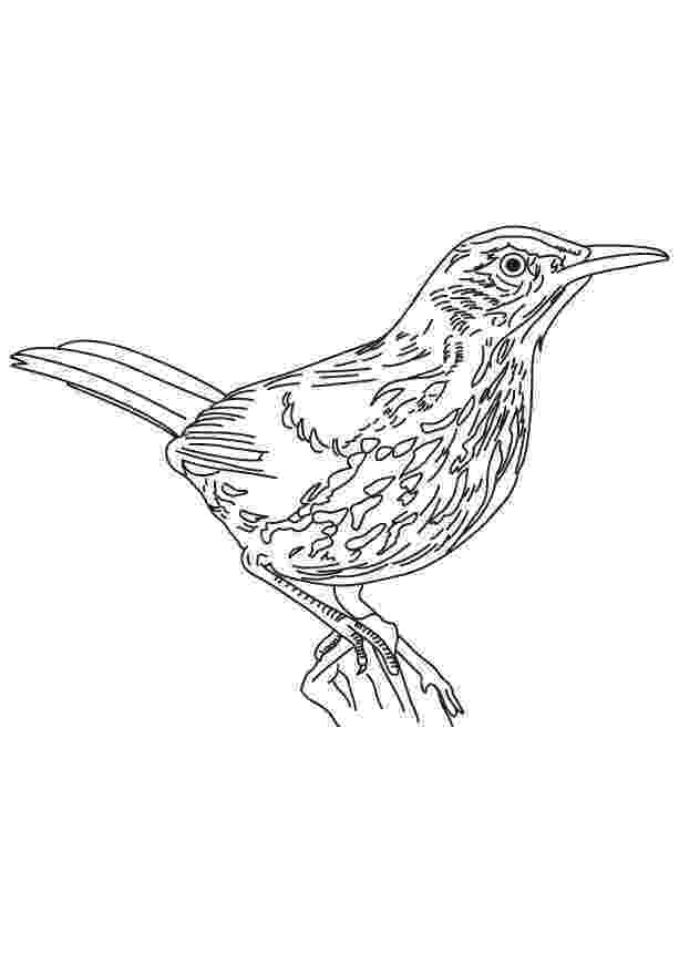 brown thrasher coloring page brown thrasher coloring page creativetherapytools coloring thrasher page brown