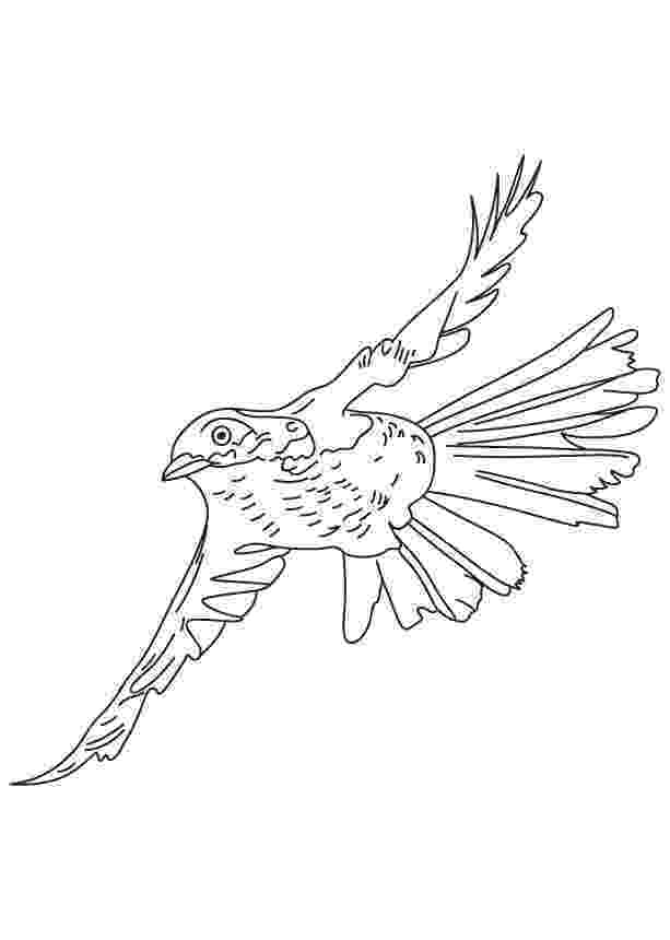 brown thrasher coloring page flying brown thrasher coloring page download free flying brown thrasher coloring page