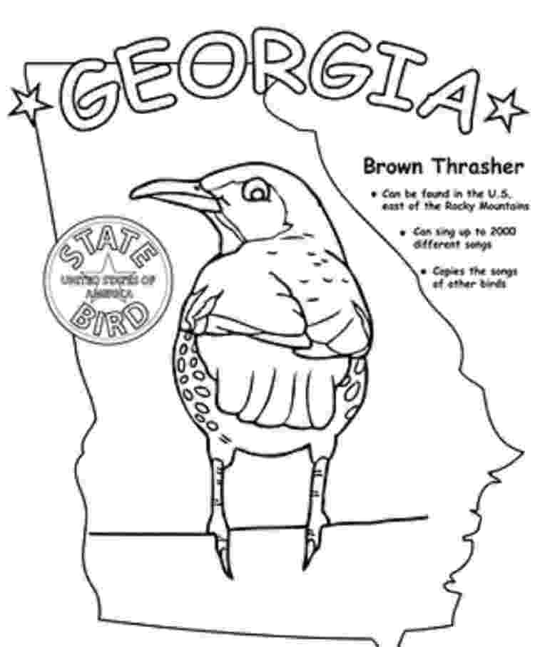 brown thrasher coloring page georgia state bird coloring page coloring pages for kids thrasher brown page coloring