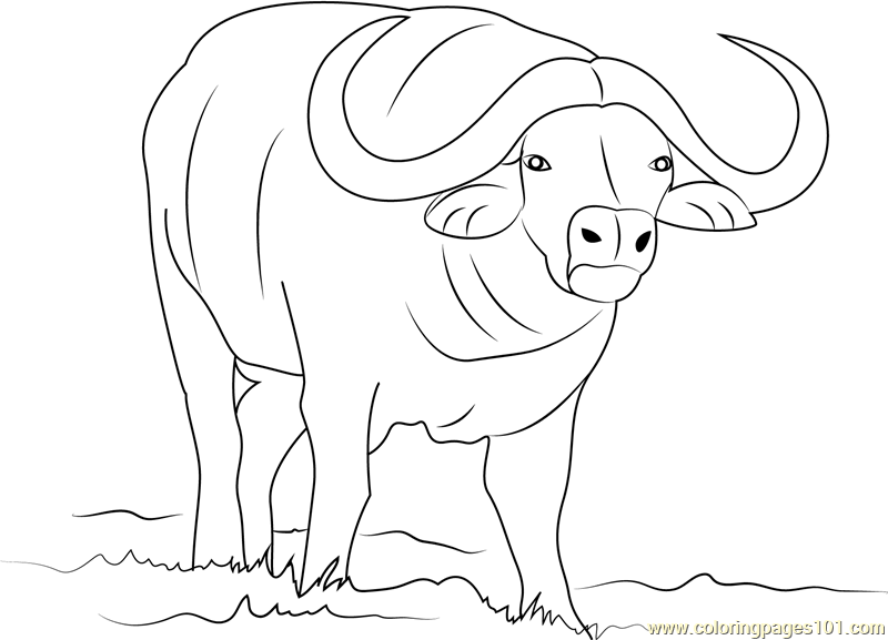 buffalo pictures to color 062613 free coloring pages and coloring books for kids buffalo to pictures color