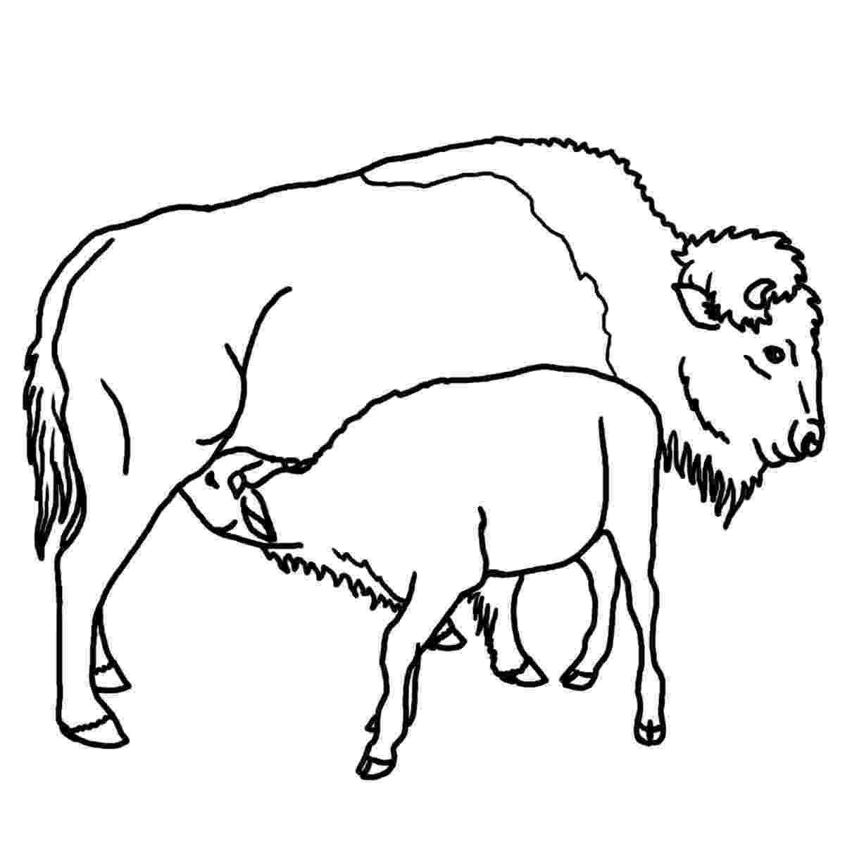 buffalo pictures to color african animals coloring pages getcoloringpagescom to color buffalo pictures