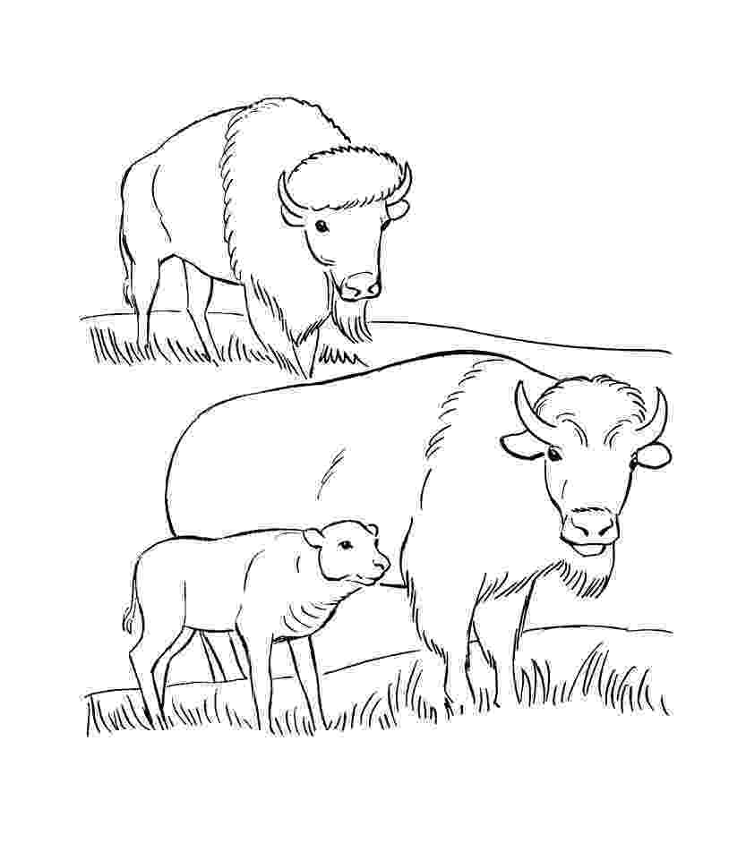 buffalo pictures to color buffalo coloring page free buffalo coloring pages color pictures buffalo to