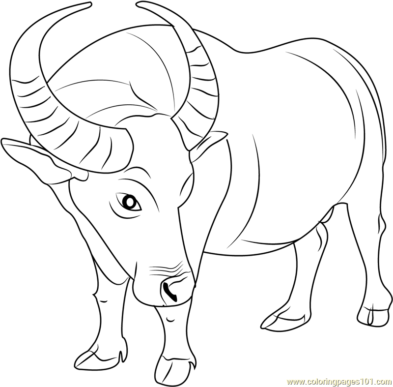 buffalo pictures to color cape buffalo coloring online super coloring color buffalo pictures to