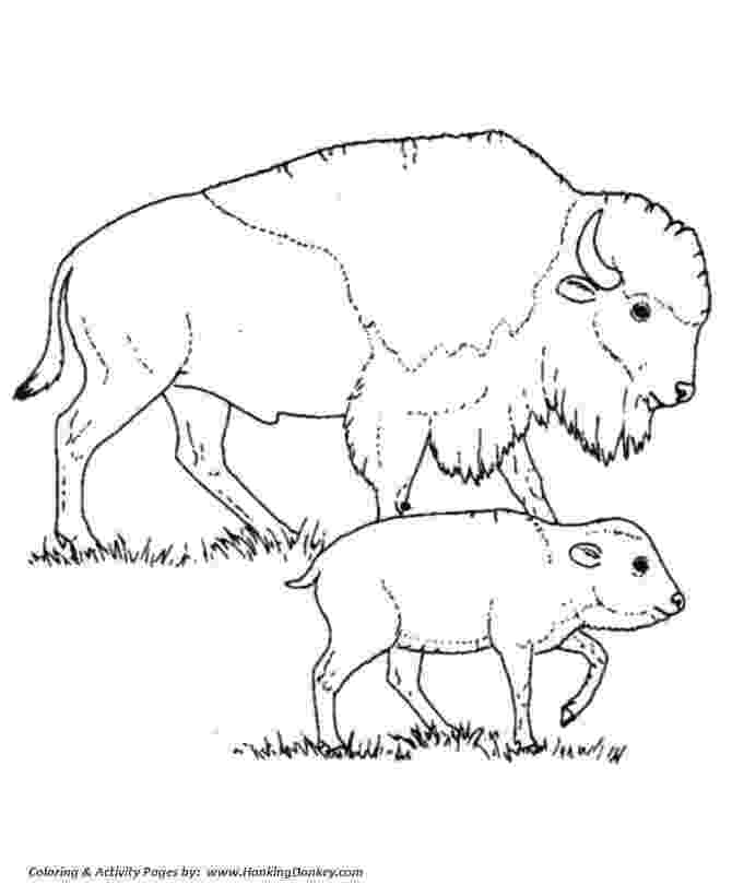 buffalo pictures to color free buffalo and bison coloring pages pictures to buffalo color