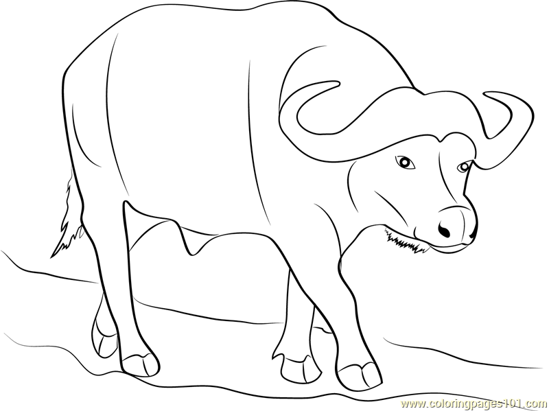 buffalo pictures to color water buffalo coloring pages food ideas buffalo pictures to color