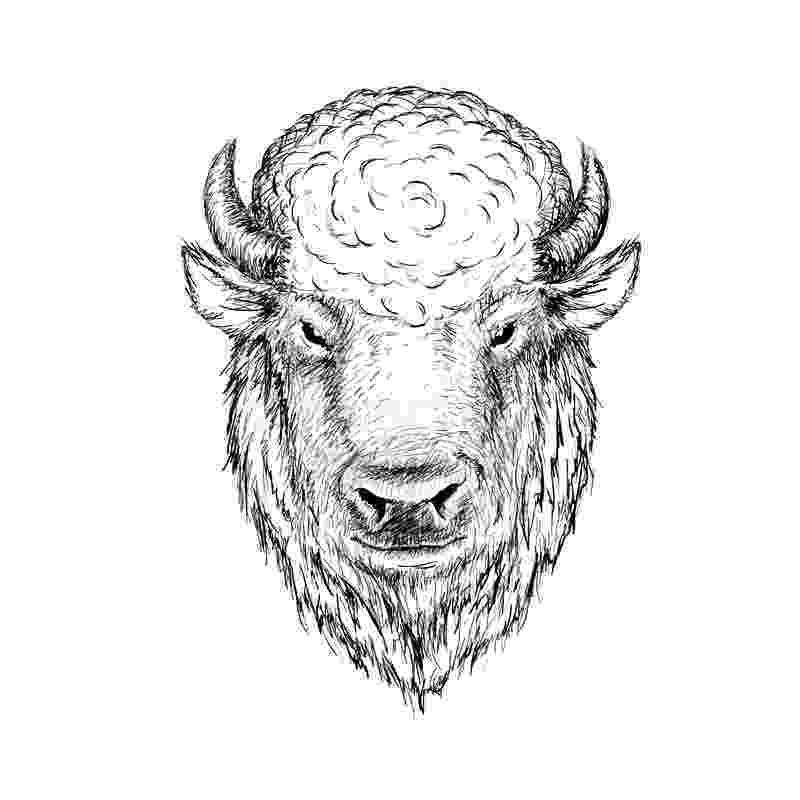 buffalo vector buffalo american bison stock vector art 523406086 istock buffalo vector