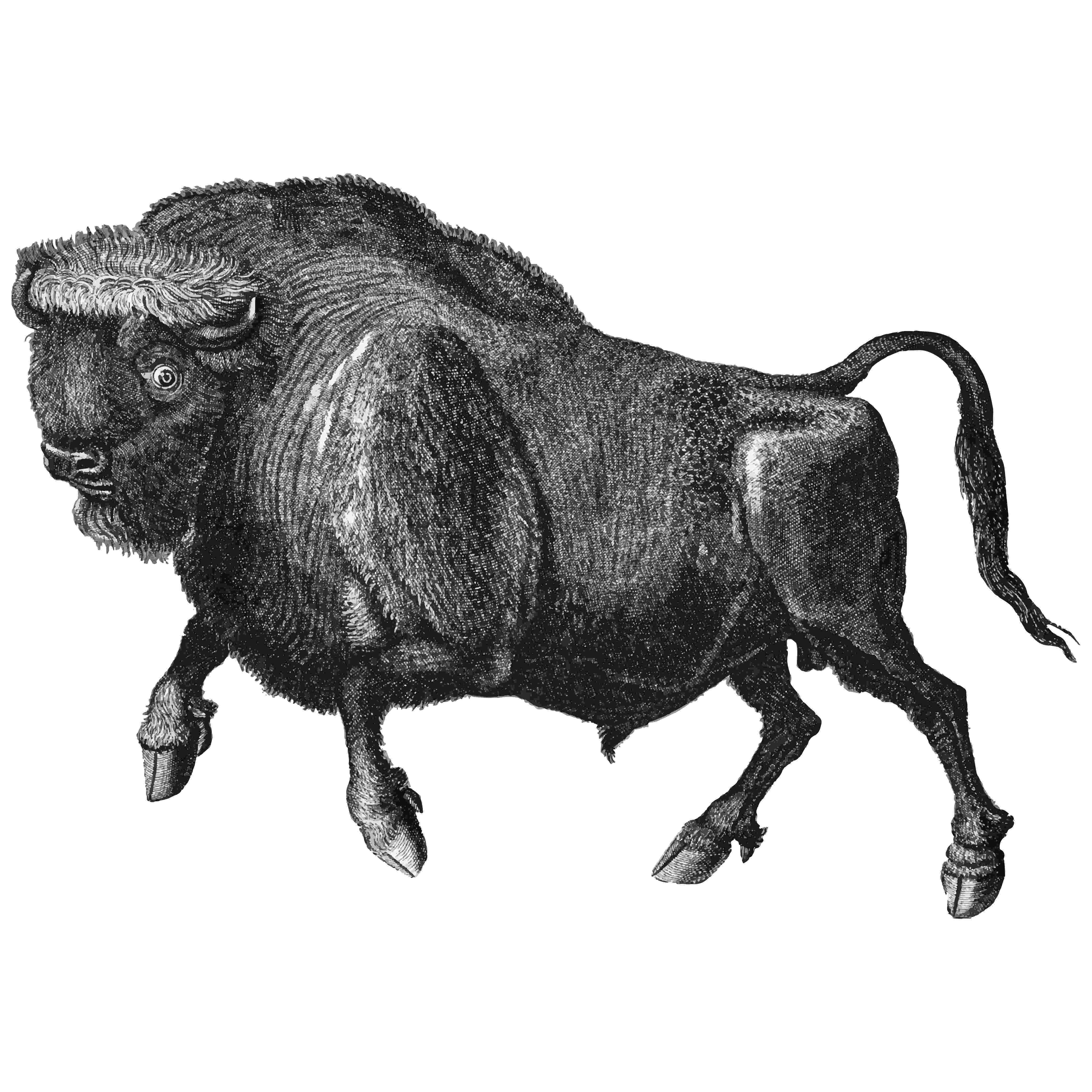 buffalo vector buffalo buffalo vector