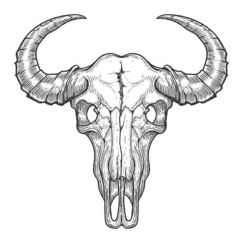 buffalo vector buffalo vector buffalo vector