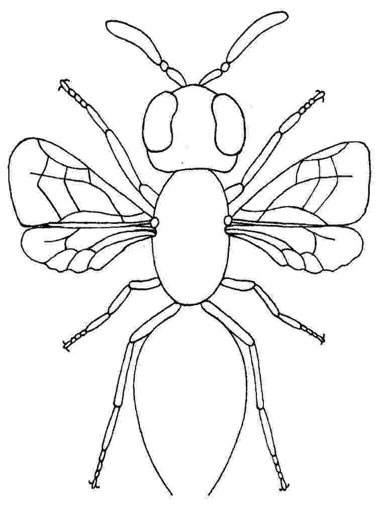 bug coloring page free printable bug coloring pages for kids coloring bug page 1 1