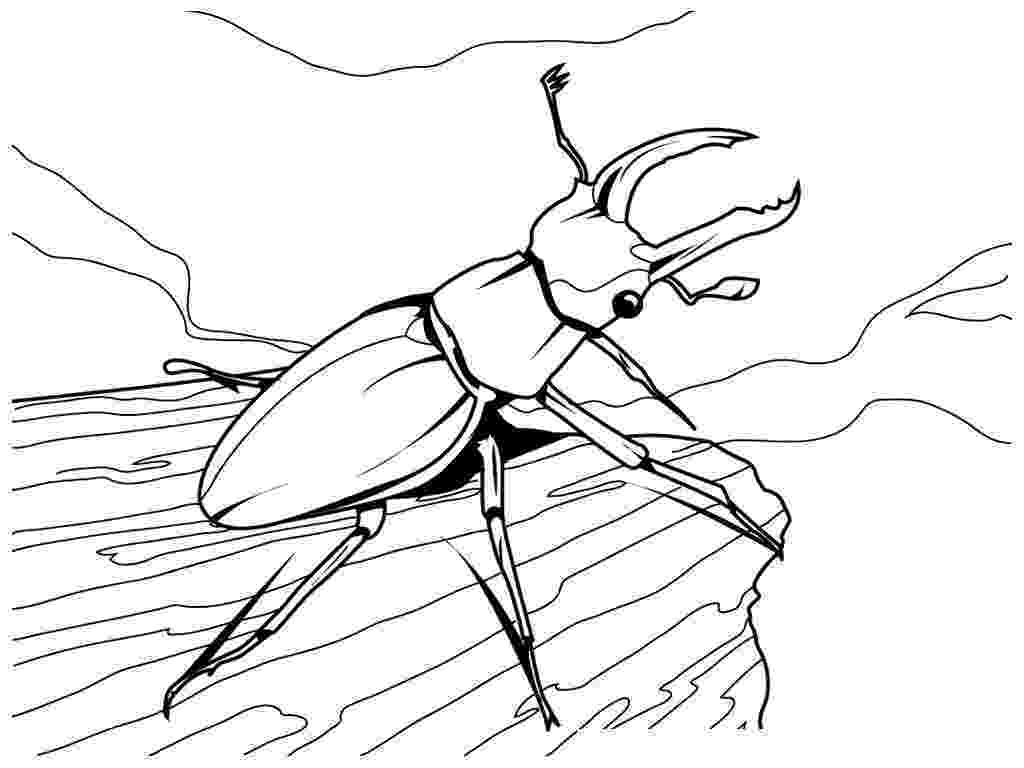 bug coloring page free printable bug coloring pages for kids page bug coloring