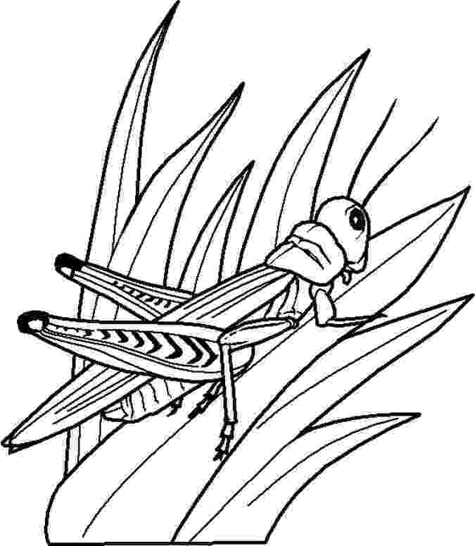 bug coloring page free printable bug coloring pages for kids page coloring bug