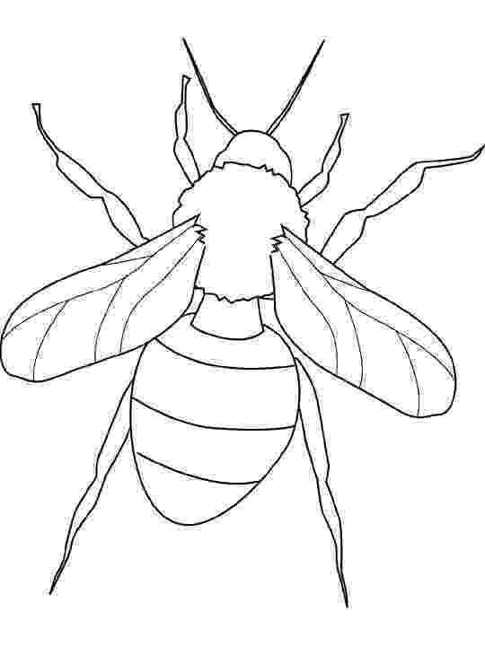 bug coloring page letter b is for bug coloring page free printable page bug coloring