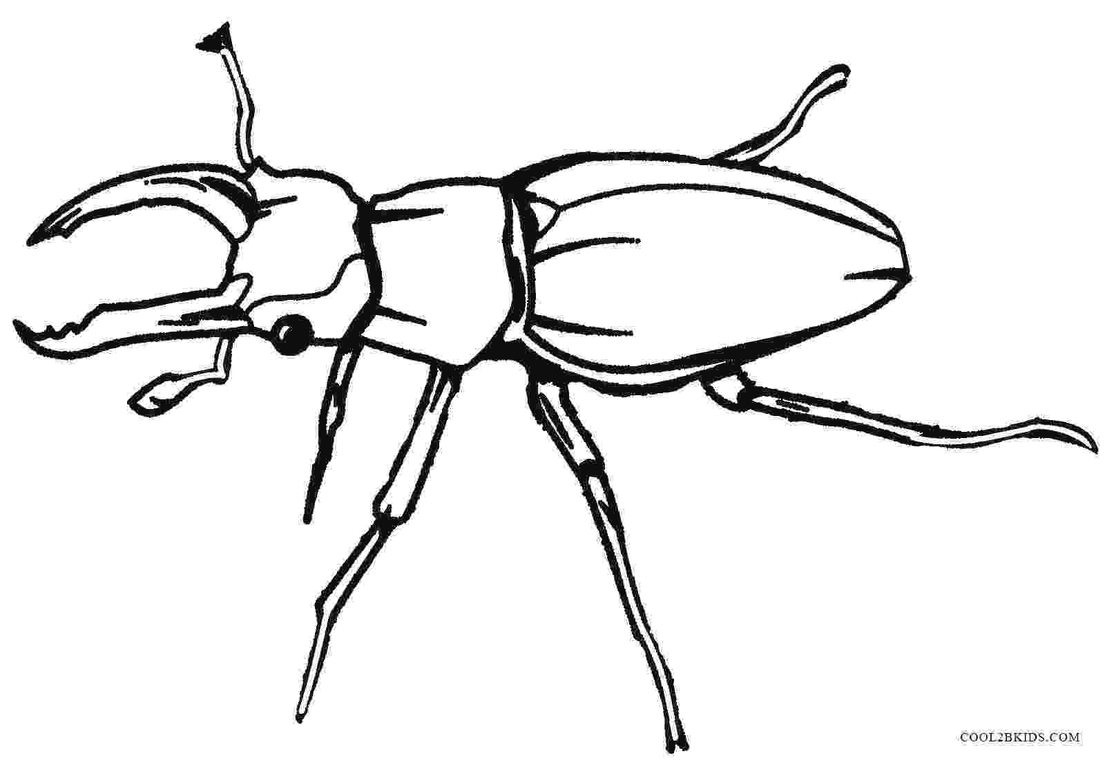 bug coloring page printable bug coloring pages for kids cool2bkids page coloring bug 1 1