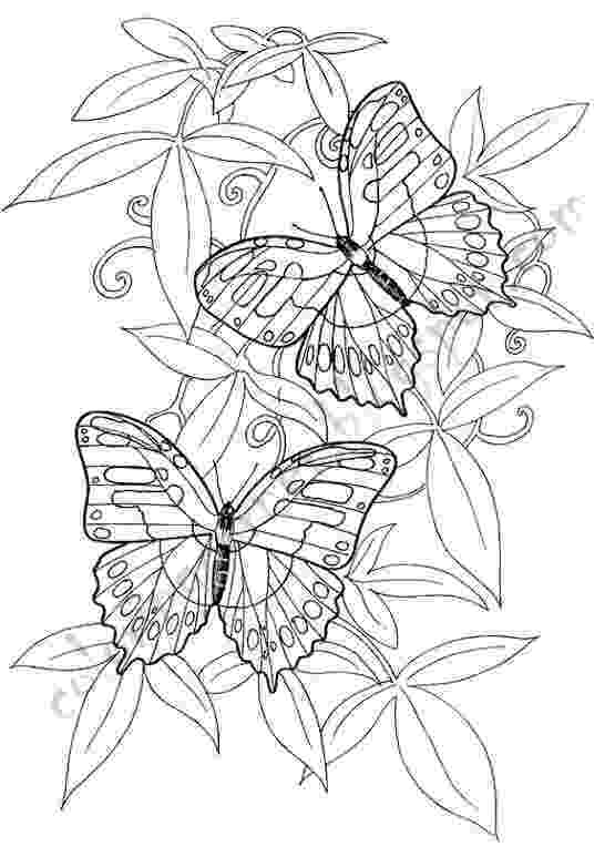 butterflies coloring pages butterfly coloring pages butterflies pages coloring