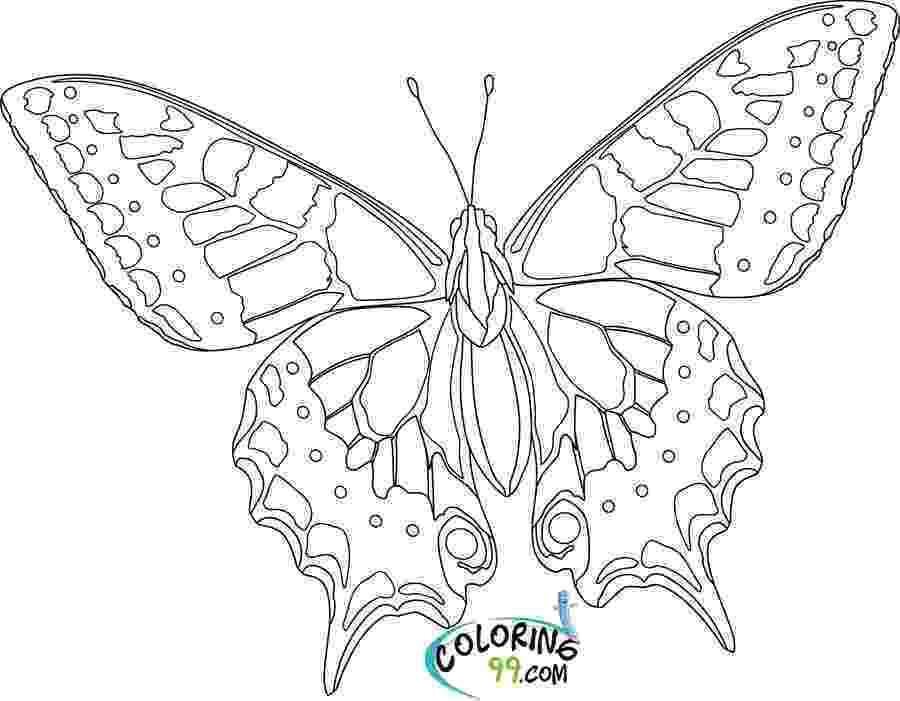 butterflies coloring pages colours drawing wallpaper beautiful colour butterflies coloring butterflies pages
