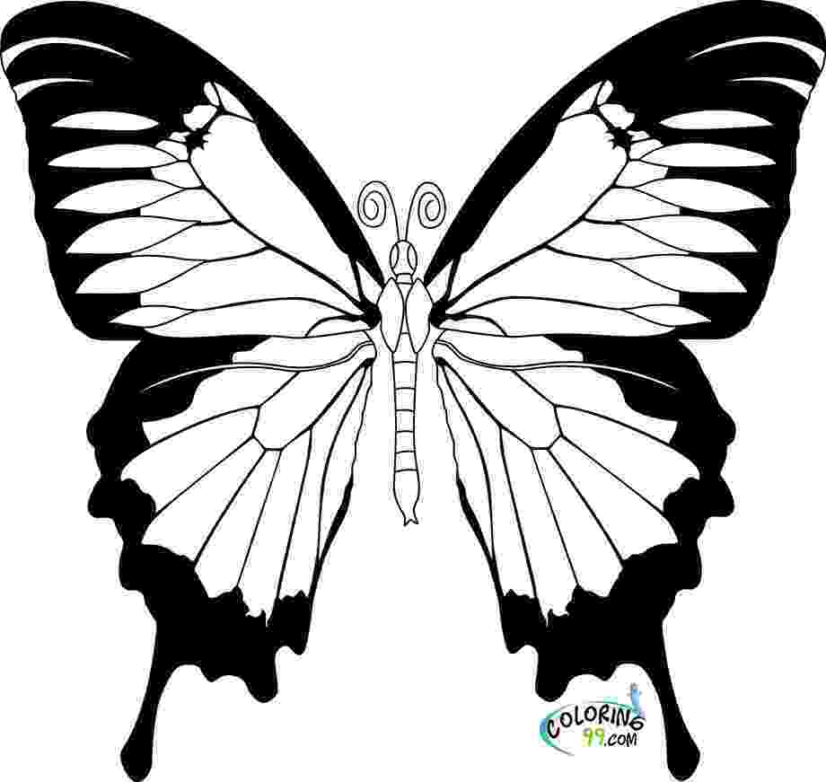 butterflies coloring pages cute and beauty butterfly coloring sheet pages coloring butterflies