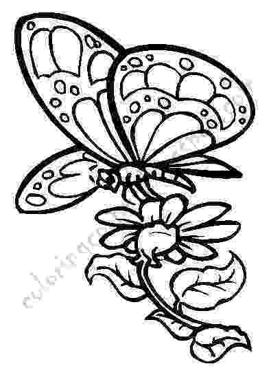 butterflies coloring pages global art coloring pages of butterflies and coloring butterflies pages