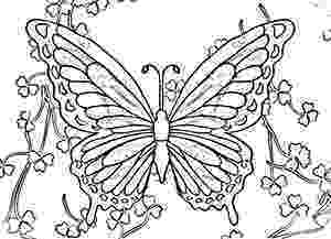 butterflies coloring pages printable butterfly coloring pages for kids cool2bkids butterflies coloring pages