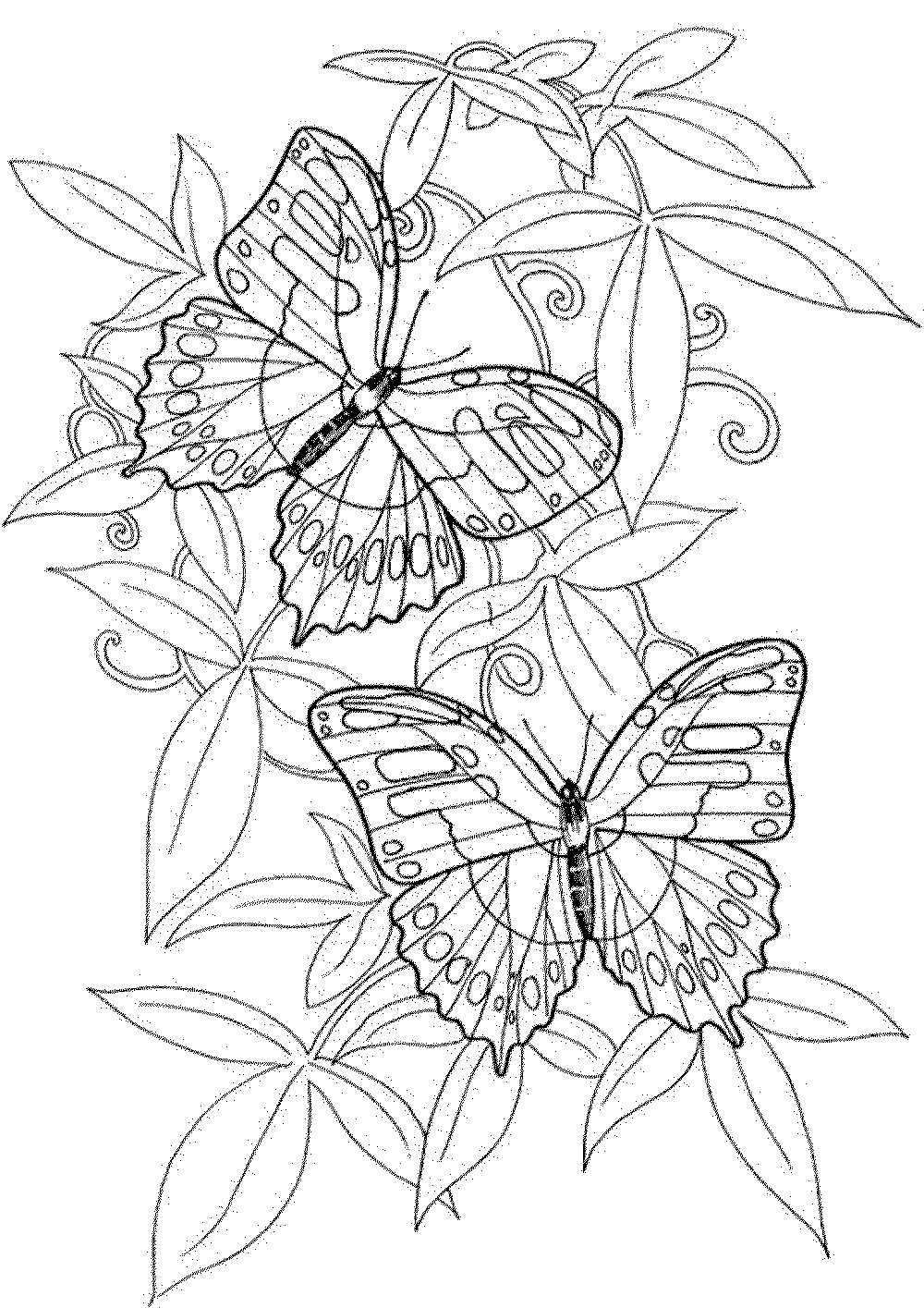 butterfly coloring pages for adults butterfly coloring page coloring for butterfly adults pages