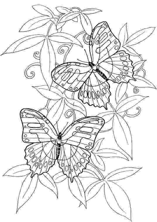 butterfly coloring pages for adults mike tyson tattoos coloring pages butterfly pages adults butterfly coloring for